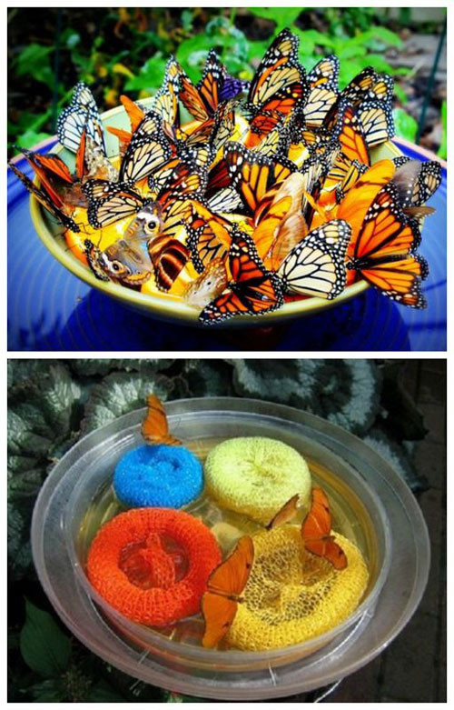 Best ideas about DIY Butterfly Feeder . Save or Pin 20 Best Crafts for the Garden e Little Project Now.