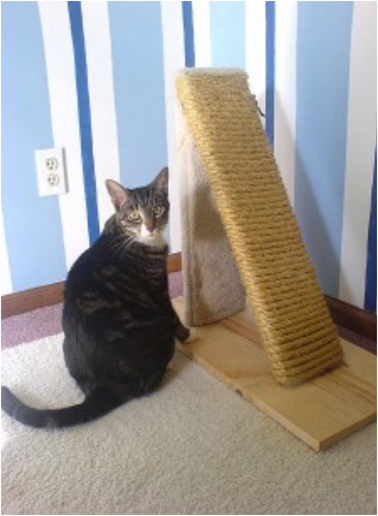 Best ideas about DIY Cat Scratching Post Plans . Save or Pin Top 10 DIY Cat Scratching Posts and Pads Top Inspired Now.