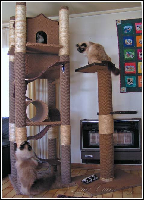 Best ideas about DIY Cat Scratching Post Plans . Save or Pin diy cat tree Now.