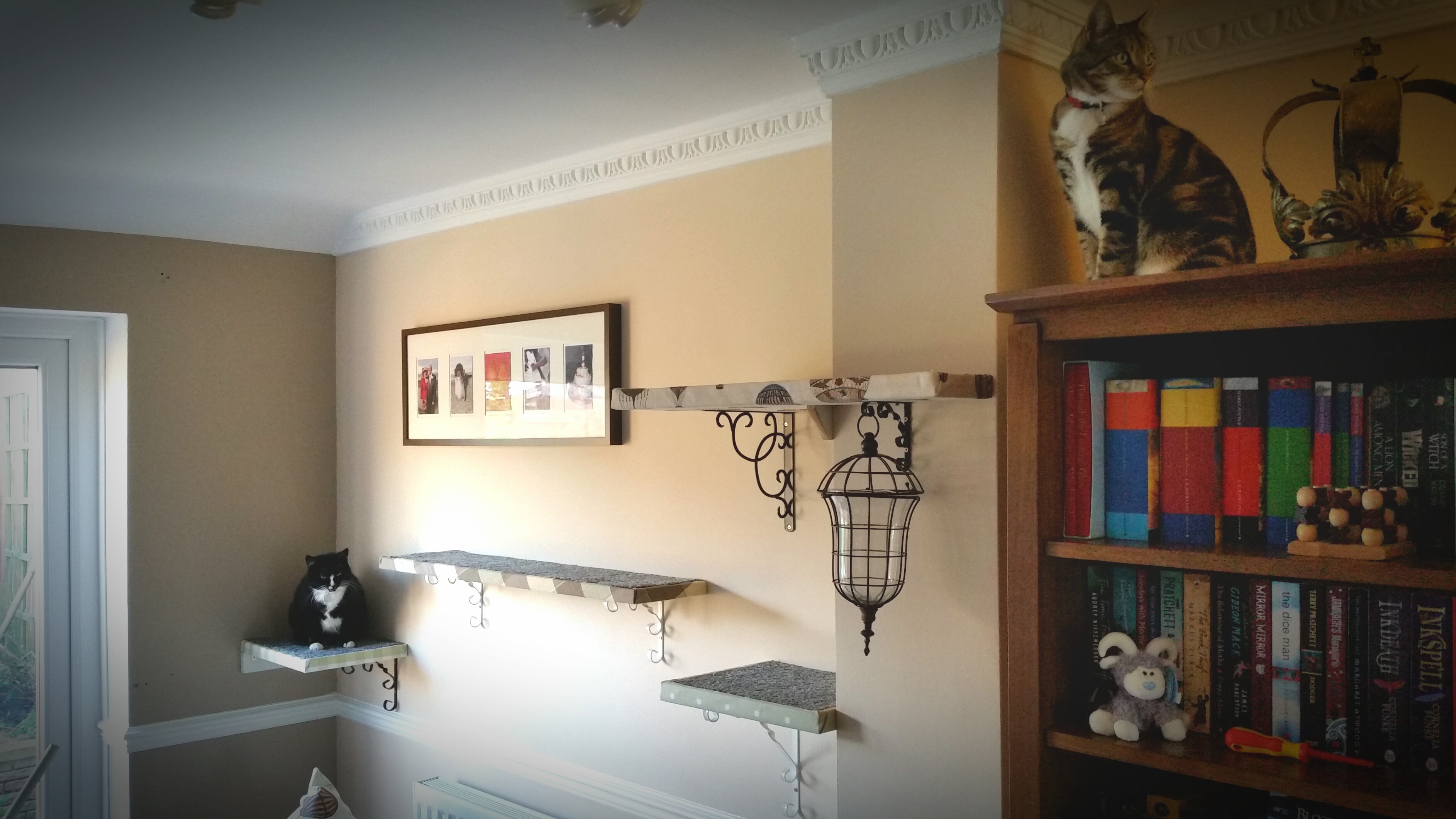 Best ideas about DIY Cat Wall Shelves . Save or Pin How to Make Homemade DIY Cat Shelves Now.