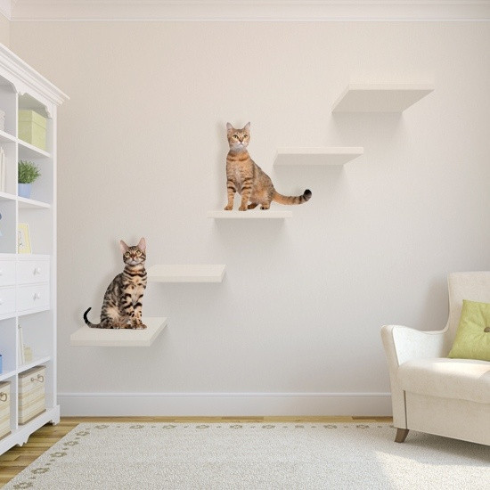 Best ideas about DIY Cat Wall Shelves . Save or Pin 10 DIY Ideas for Cat Lovers & Small Spaces IAG Now.
