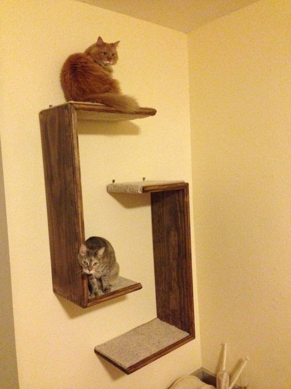 Best ideas about DIY Cat Wall Shelves . Save or Pin I m on the hunt for cat tree ideas to expand my small New Now.