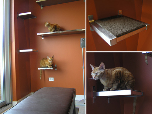 Best ideas about DIY Cat Wall Shelves . Save or Pin Keaton and Scoochie Build Their Own DIY Cat Climbing Now.