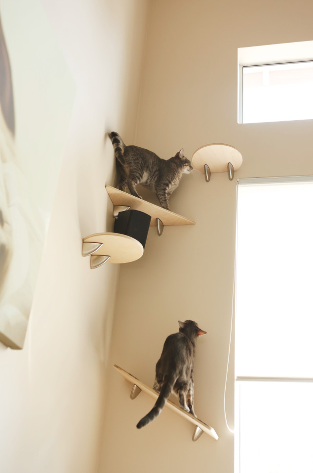 Best ideas about DIY Cat Wall Shelves . Save or Pin Giggly cats Catification Now.