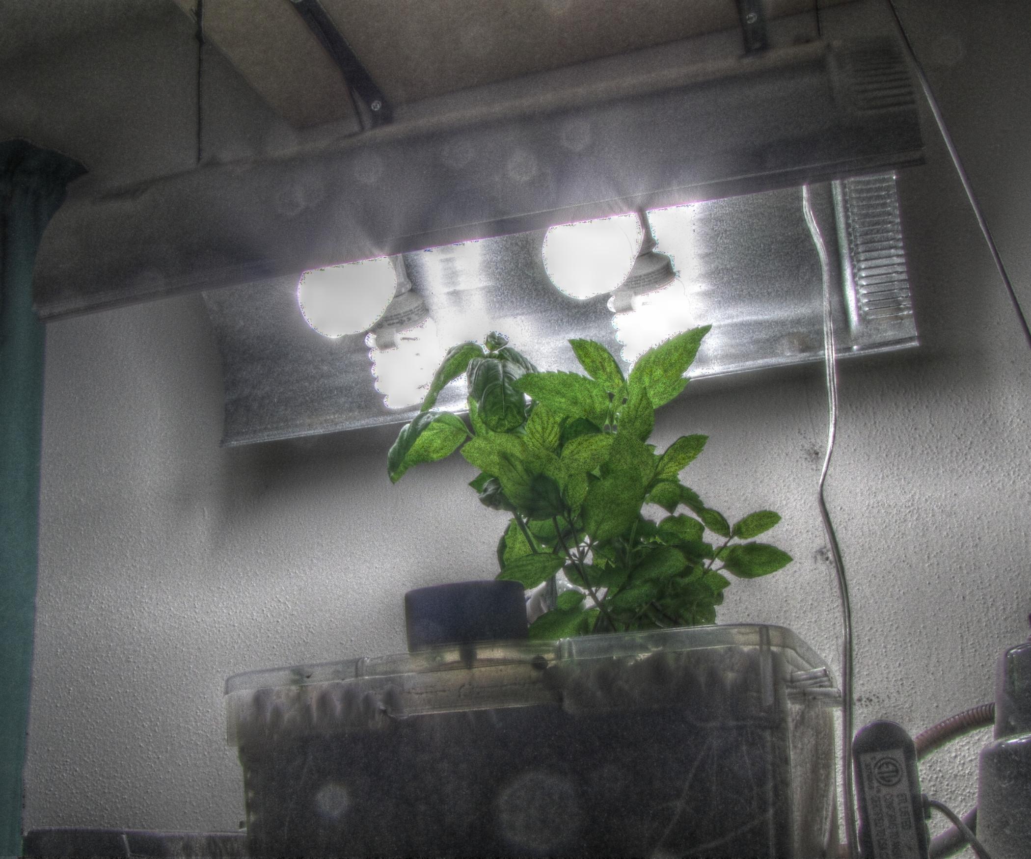 Best ideas about DIY Cfl Grow Light . Save or Pin Cheap DIY CFL Grow Light Now.