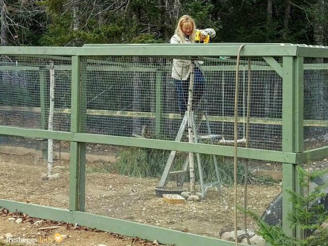 Best ideas about DIY Chicken Run . Save or Pin Building a Predator Proof Chicken Run Now.