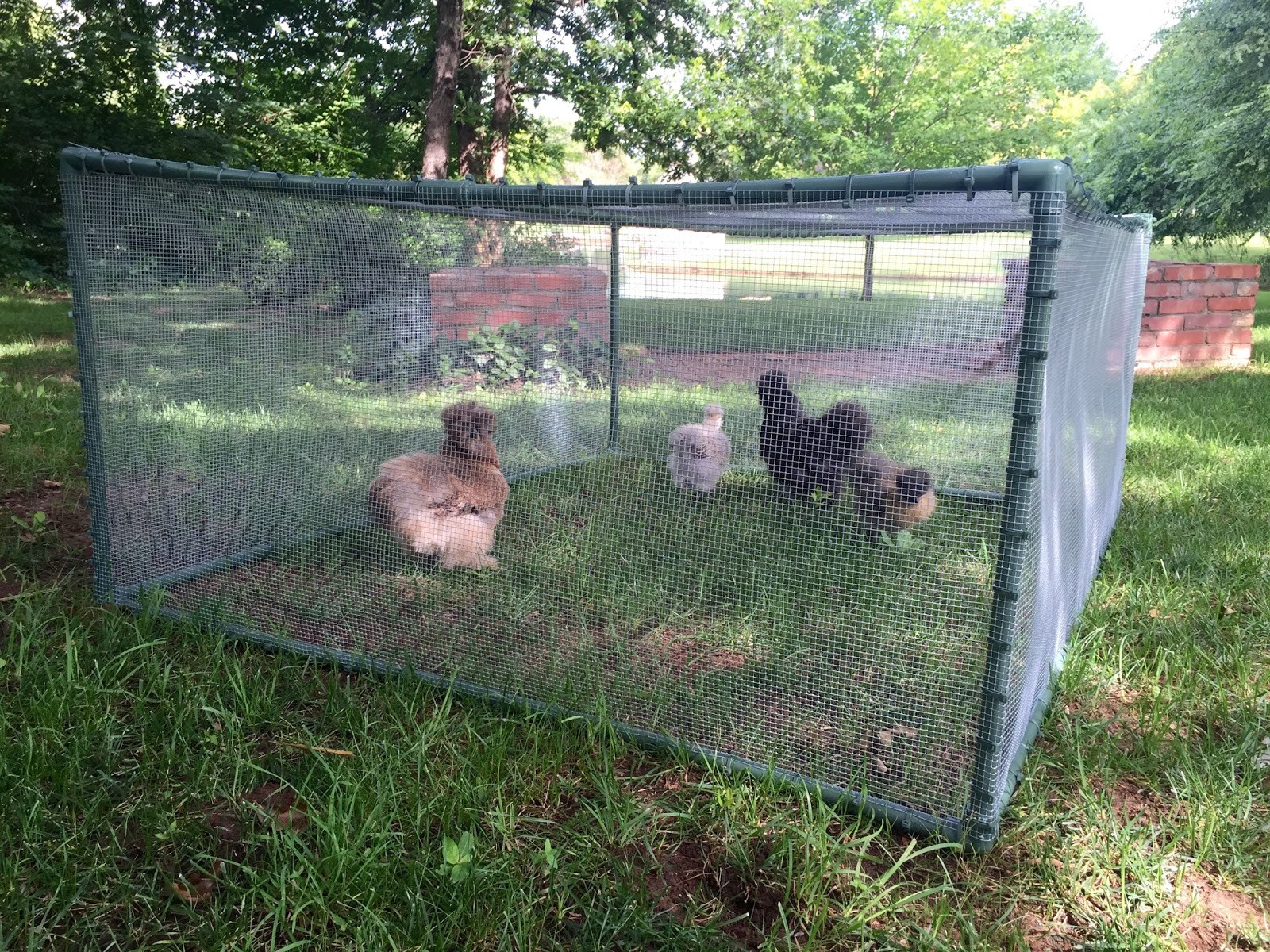 Best ideas about DIY Chicken Run . Save or Pin Eleven Gables DIY Cheap and Easy Portable Chicken Now.