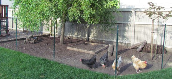 Best ideas about DIY Chicken Run . Save or Pin Chicken Coop Tour DIY coop four chickens cost about Now.
