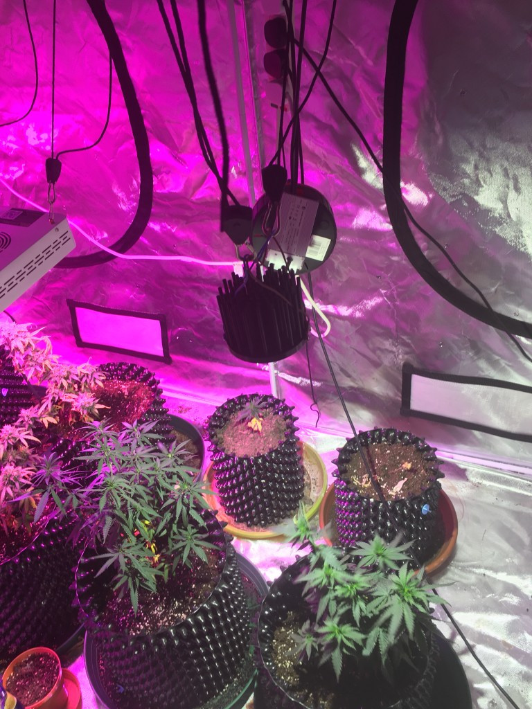 Best ideas about DIY Cob Led Grow Light . Save or Pin Cree DIY COB LED Why do people use white lights Page 7 Now.