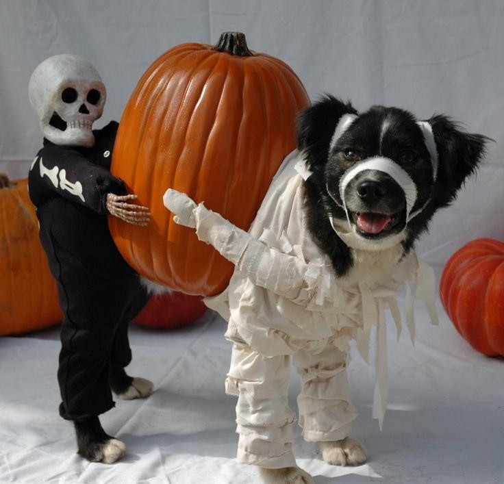 Best ideas about DIY Costumes For Dogs . Save or Pin 18 Dogs That Absolutely Love Their Halloween Costumes Now.