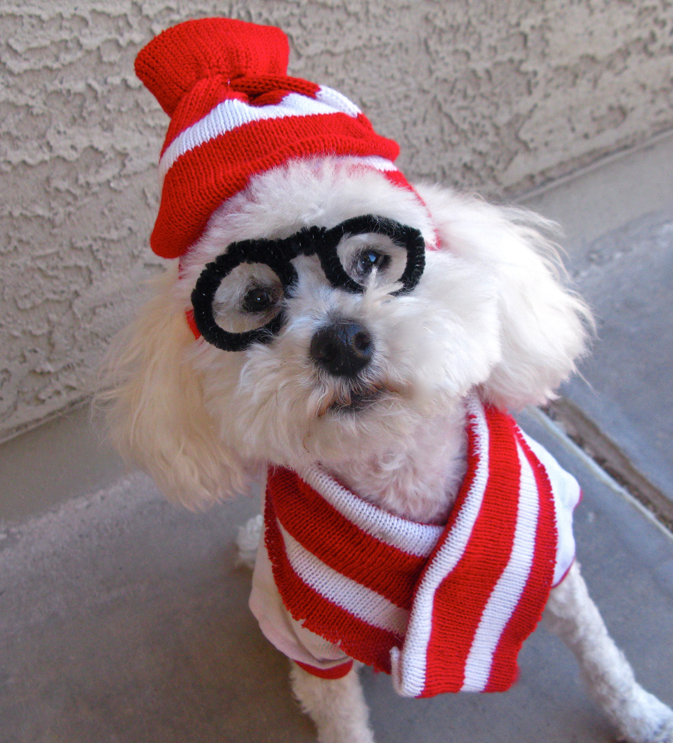 Best ideas about DIY Costumes For Dogs . Save or Pin Last Minute DIY Halloween Costumes for Your Dog Broke Now.