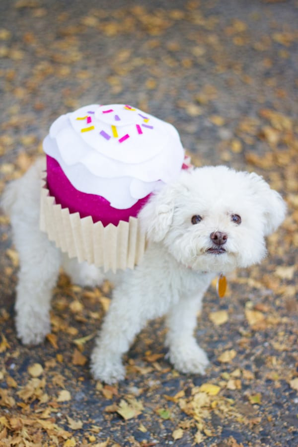 Best ideas about DIY Costumes For Dogs . Save or Pin Pet Halloween Costume Cupcake Now.