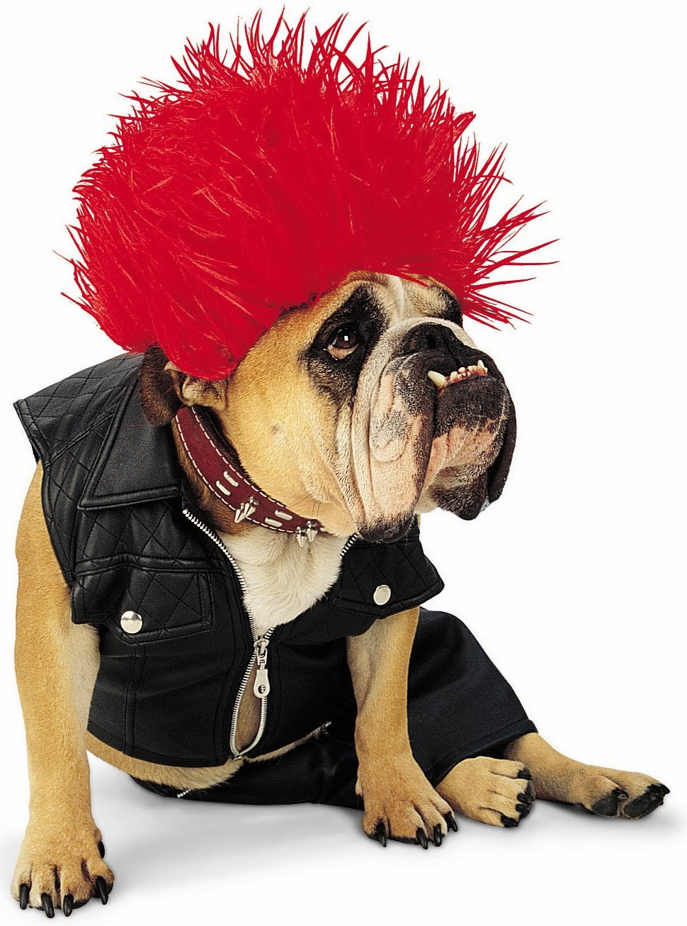Best ideas about DIY Costumes For Dogs . Save or Pin Petsofoz Blog Pet News Information and Product Now.