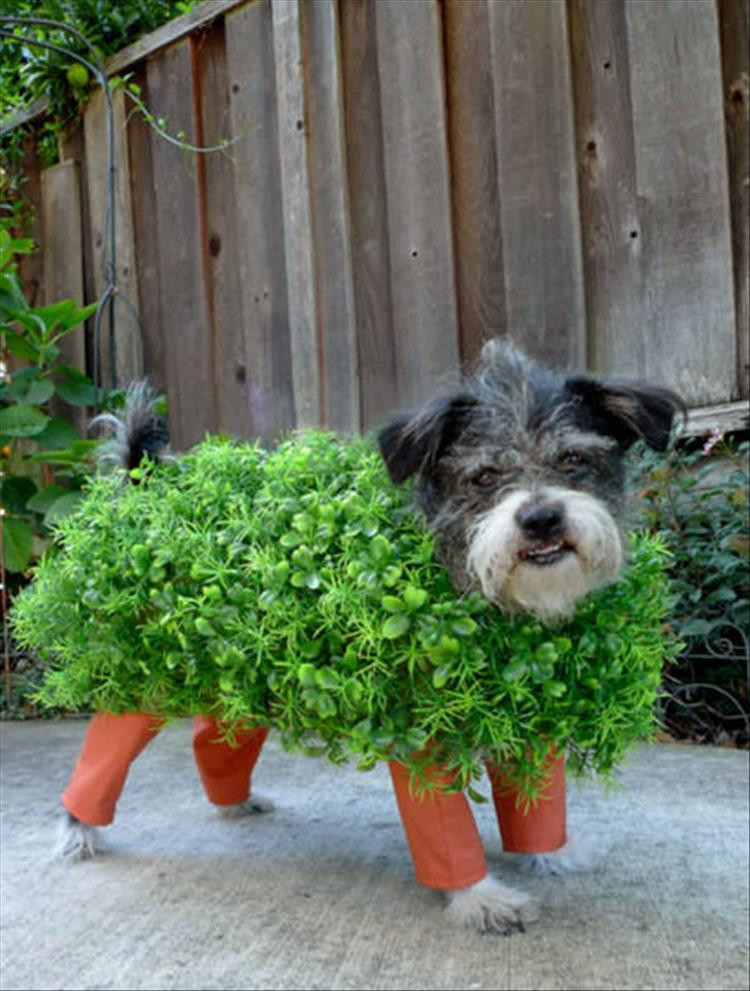 Best ideas about DIY Costumes For Dogs . Save or Pin The Best Halloween Costume Ideas For Your Dogs 23 Pics Now.