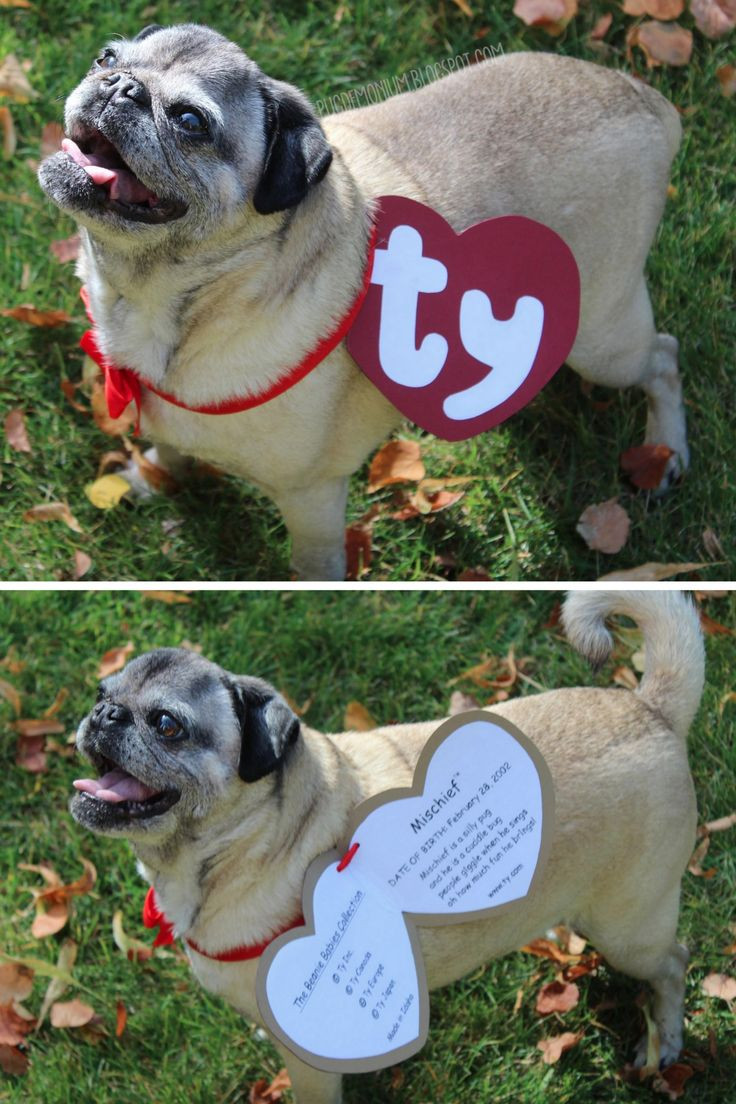 Best ideas about DIY Costumes For Dogs . Save or Pin DIY Beanie Baby Pet Costume Tutorial and Template from Now.
