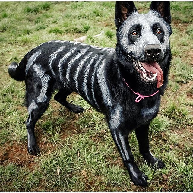 Best ideas about DIY Costumes For Dogs . Save or Pin DIY Halloween Costumes For Dogs Now.
