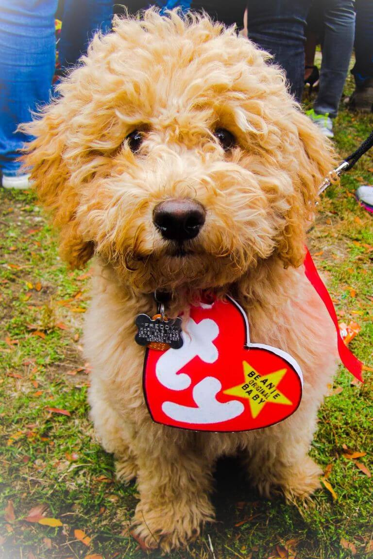 Best ideas about DIY Costumes For Dogs . Save or Pin Halloween Costume Ideas For Dogs Festival Around the World Now.