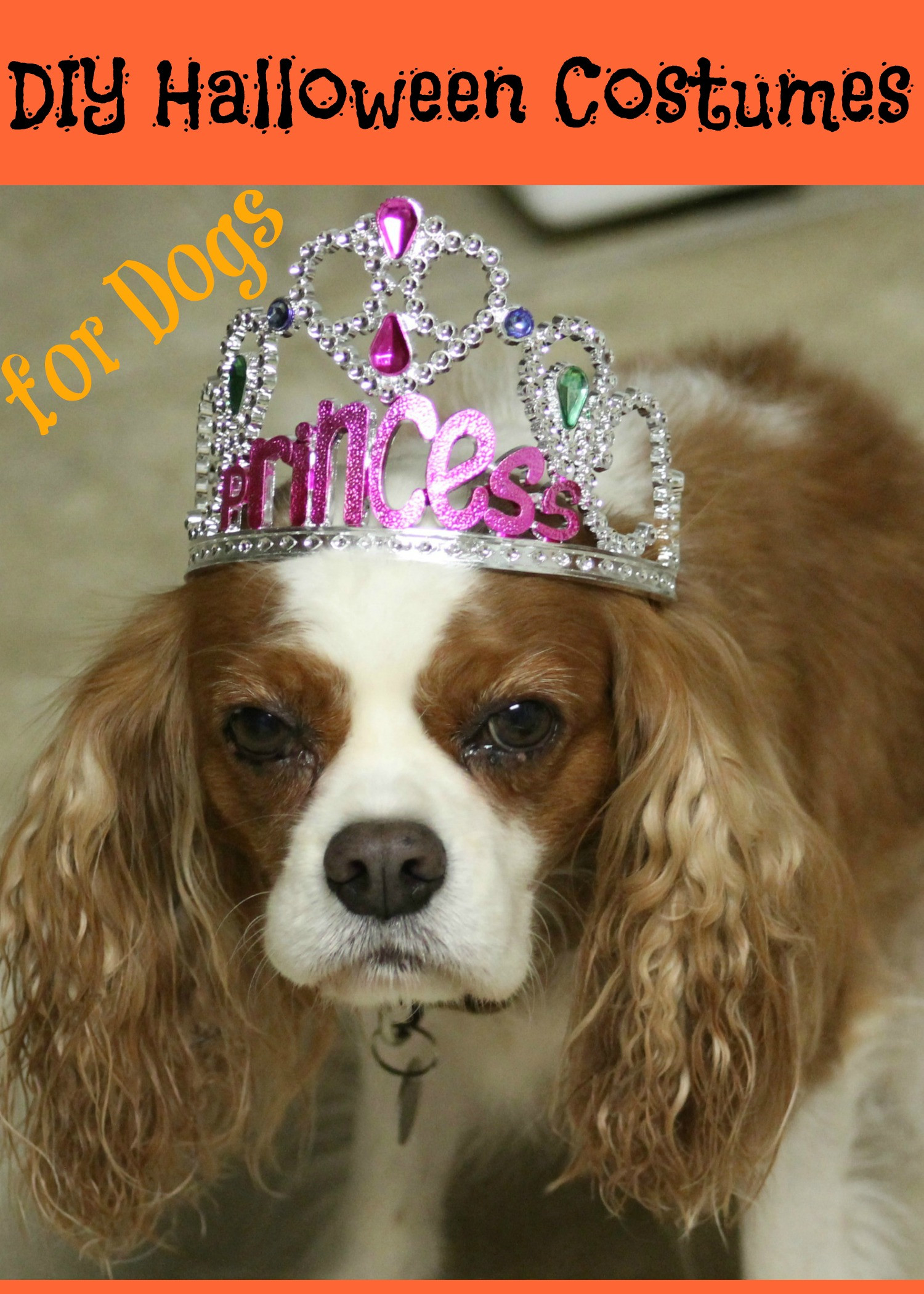 Best ideas about DIY Costumes For Dogs . Save or Pin 5 DIY Halloween Costumes for Dogs Now.