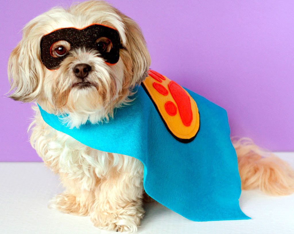 Best ideas about DIY Costumes For Dogs . Save or Pin Handmade Halloween Costumes Now.