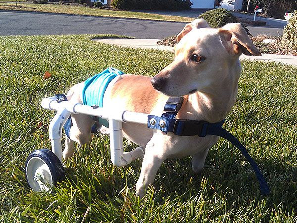 Best ideas about DIY Doggie Wheelchair . Save or Pin Jerry West Builds Wheelchairs for Dogs in Need Now.