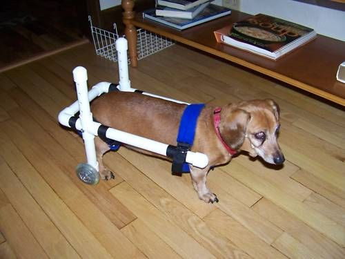 Best ideas about DIY Doggie Wheelchair . Save or Pin Small Dog Wheelchair Diy Goldenacresdogs Now.