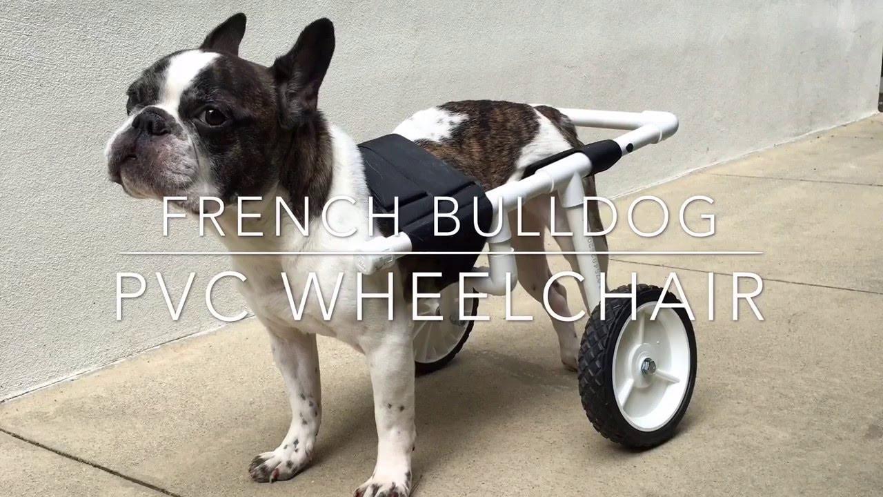 Best ideas about DIY Doggie Wheelchair . Save or Pin DIY French Bulldog PVC Dog Wheelchair Now.