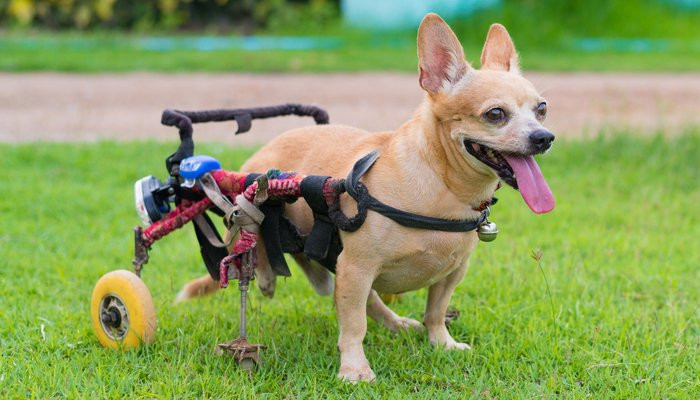 Best ideas about DIY Doggie Wheelchair . Save or Pin DIY Dog Wheelchair How to Make a Wheelchair for Dogs By Now.