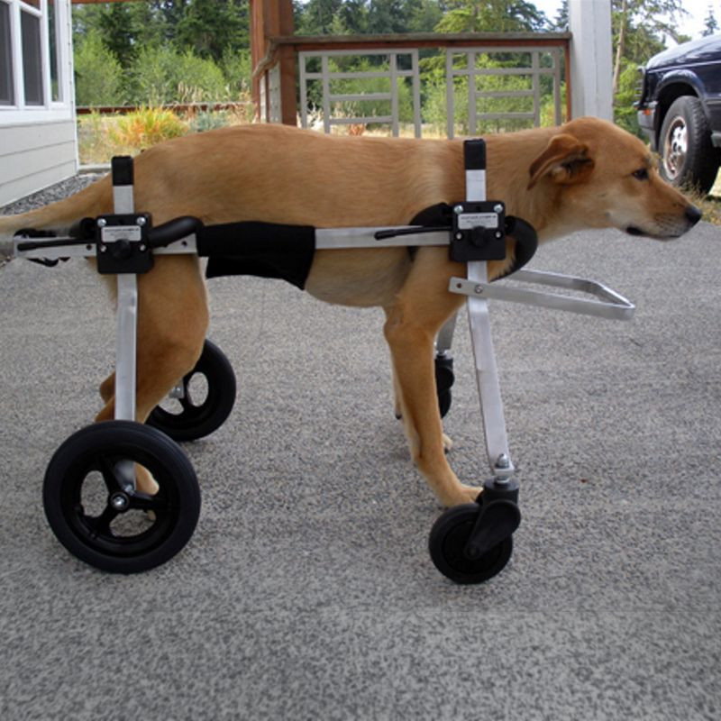 Best ideas about DIY Doggie Wheelchair . Save or Pin Pin by Mama Marci on animal prosthesis Now.