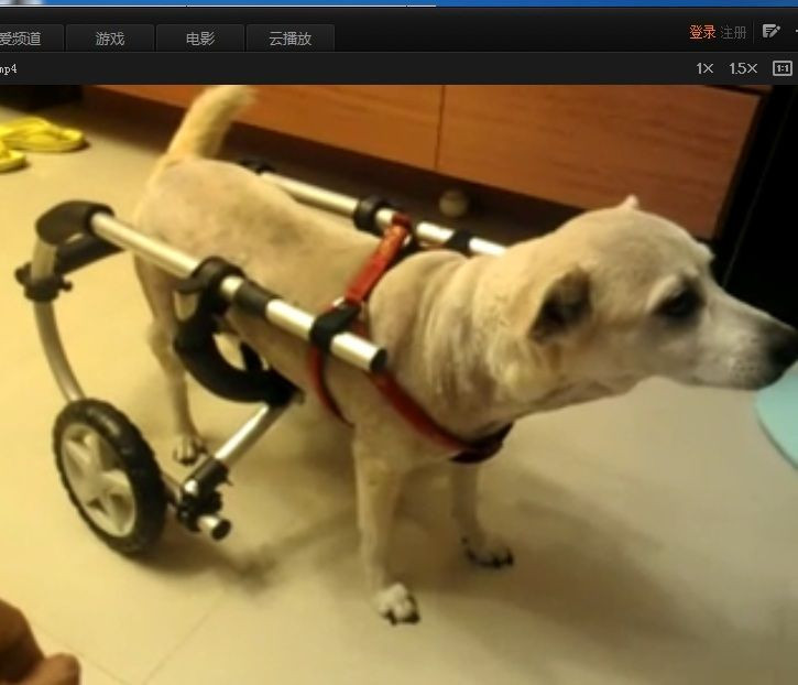 Best ideas about DIY Doggie Wheelchair . Save or Pin How to Make a Dog Wheelchair Now.