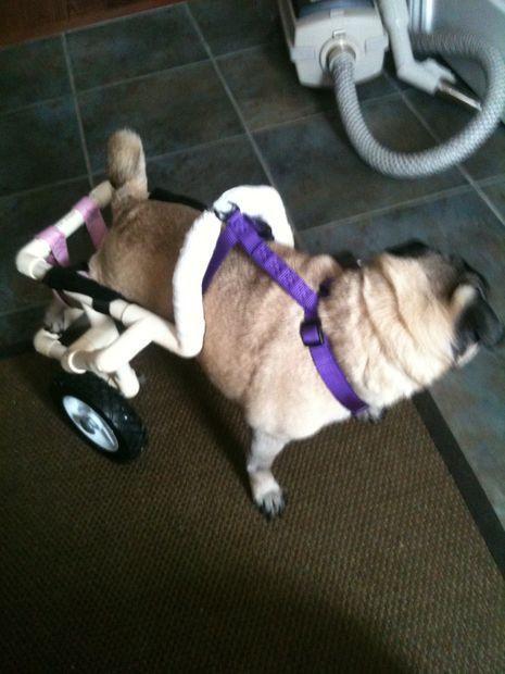 Best ideas about DIY Doggie Wheelchair . Save or Pin Best 25 Dog wheelchair ideas on Pinterest Now.
