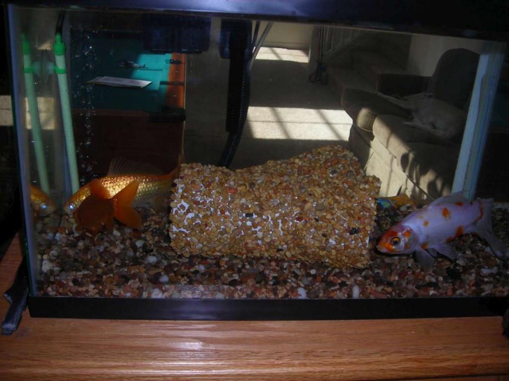 Best ideas about DIY Fish Tank Decor . Save or Pin DIY Aquarium Tunnel petdiys Now.
