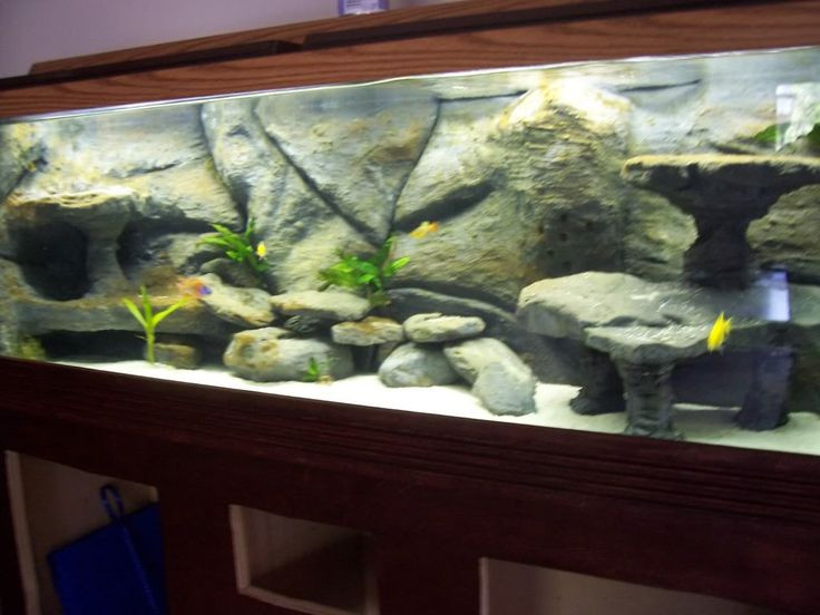 Best ideas about DIY Fish Tank Decor . Save or Pin Zoom in real dimensions 1024 x 768 Now.