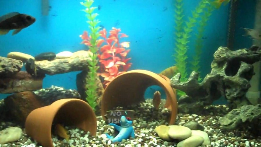 Best ideas about DIY Fish Tank Decor . Save or Pin DIY Aquarium Decor Now.