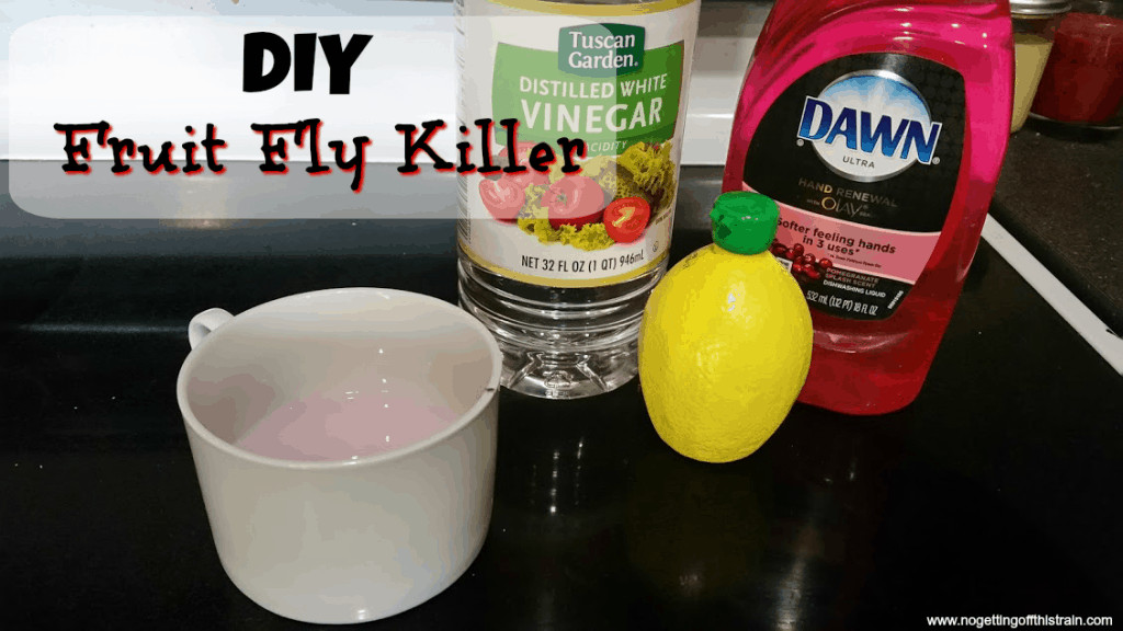 Best ideas about DIY Fly Killer . Save or Pin DIY Fruit Fly Killer No Getting f This Train Now.