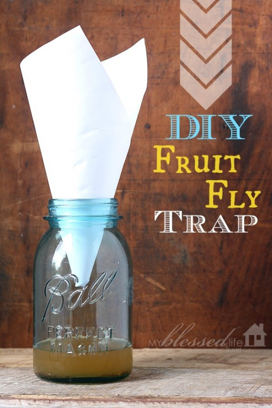 Best ideas about DIY Fly Killer . Save or Pin Daily Frugal Tip DIY Fruit Fly Trap Couponing 101 Now.