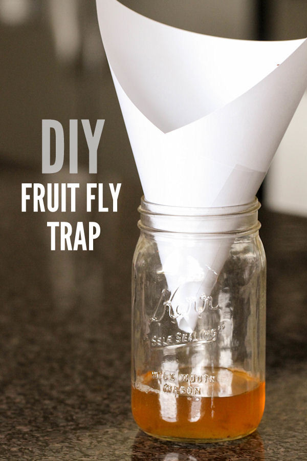 Best ideas about DIY Fly Killer . Save or Pin DIY Fruit Fly Trap Now.