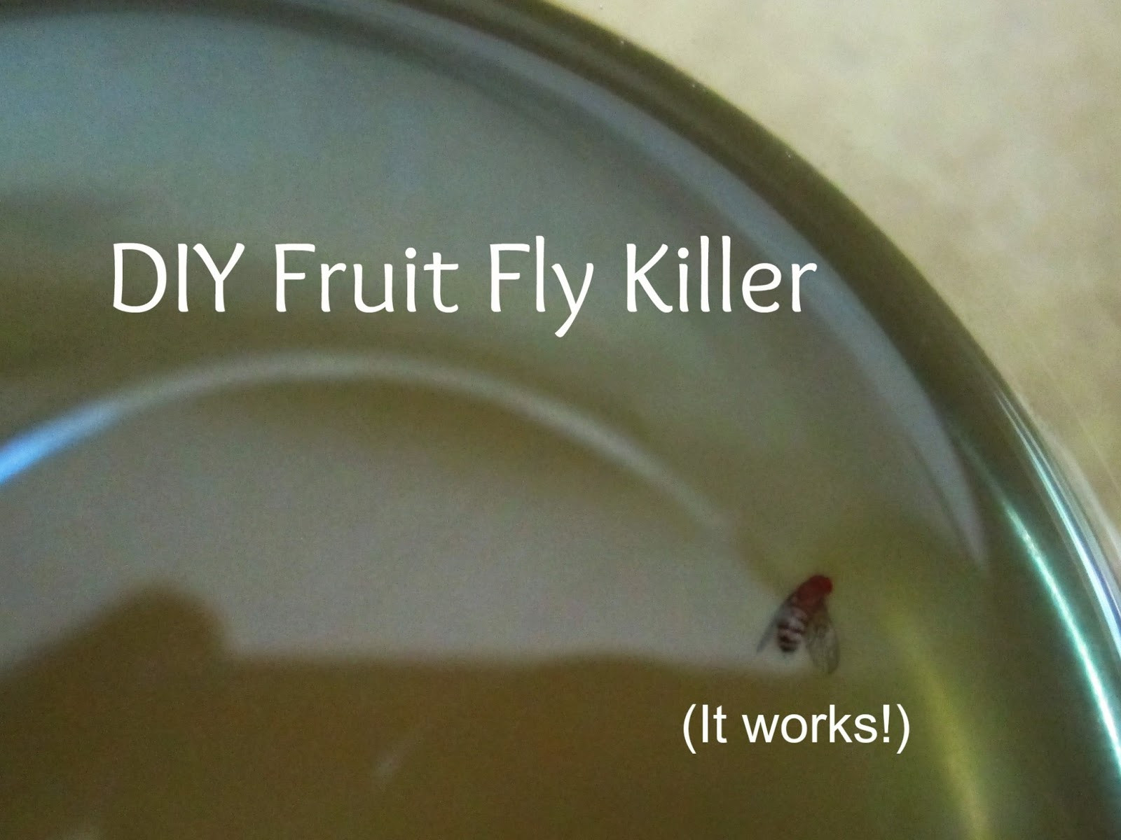 Best ideas about DIY Fly Killer . Save or Pin THE REHOMESTEADERS DIY Fruit Fly Killer Now.