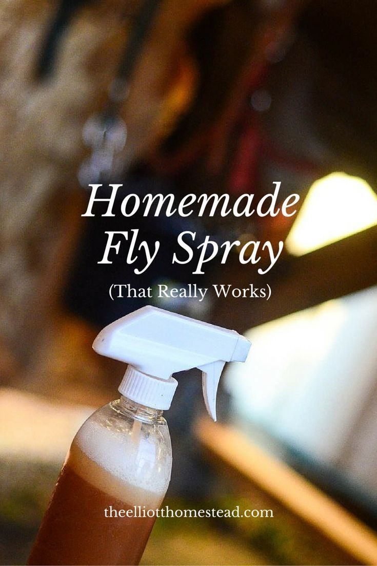 Best ideas about DIY Fly Spray . Save or Pin 25 best ideas about Homemade fly repellant on Pinterest Now.