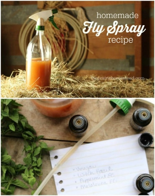 Best ideas about DIY Fly Spray . Save or Pin 25 DIY Essential Oil Sprays You Need In Your Home Right Now.