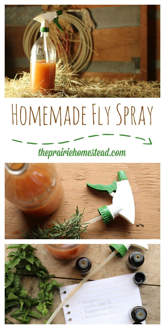 Best ideas about DIY Fly Spray . Save or Pin 1000 ideas about Fly Spray on Pinterest Now.