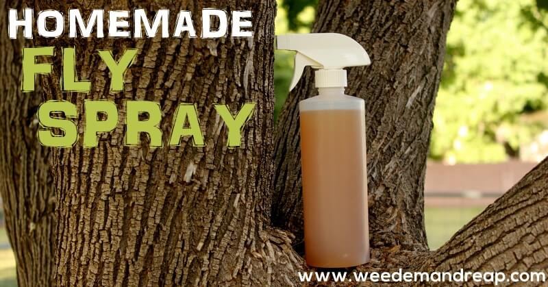 Best ideas about DIY Fly Spray . Save or Pin Homemade Fly Spray Now.