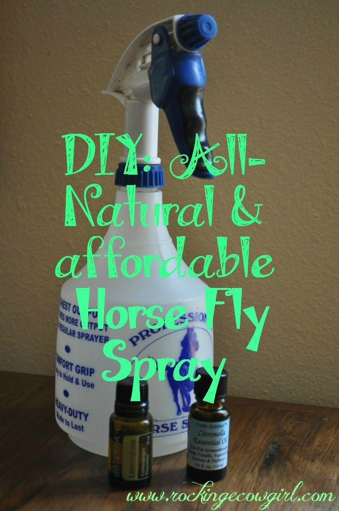 Best ideas about DIY Fly Spray . Save or Pin DIY Horse Fly Spray Now.