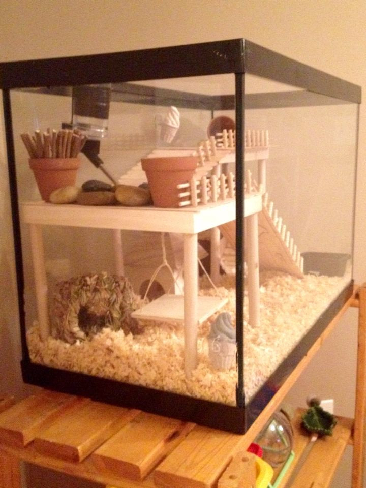 Best ideas about DIY Hamster Cage . Save or Pin 25 Best Ideas about Hamster Toys on Pinterest Now.