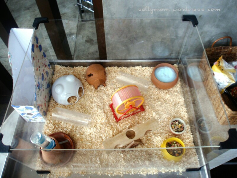 Best ideas about DIY Hamster Cage . Save or Pin DIY Hamster Cage – Deluxe Studio Apartment Now.