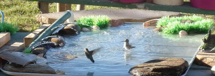 Best ideas about DIY Hummingbird Bath . Save or Pin Make Your Garden a Hummingbird Haven Now.