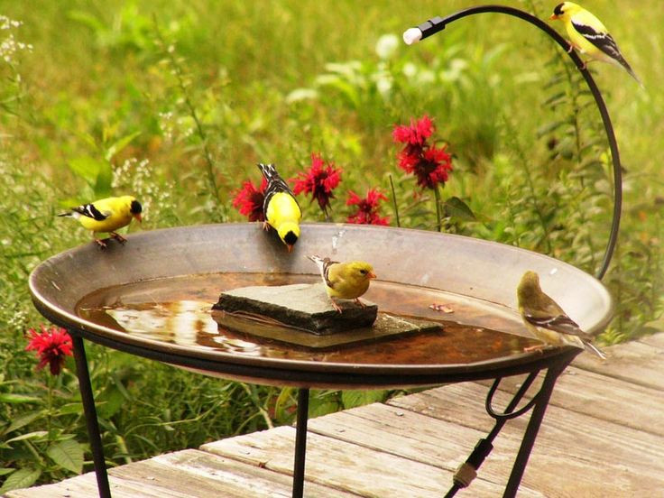 Best ideas about DIY Hummingbird Bath . Save or Pin 245 best Bird Baths images on Pinterest Now.