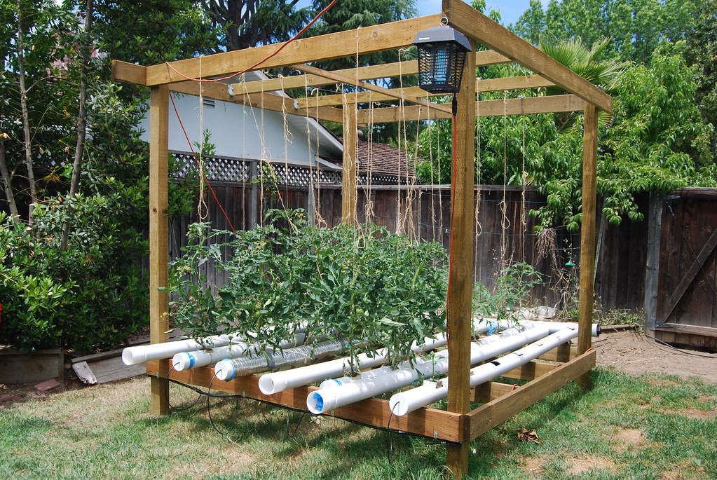 Best ideas about DIY Hydroponic Systems Plans . Save or Pin Hydroponic Tomatoes Kathy Kimpel Now.