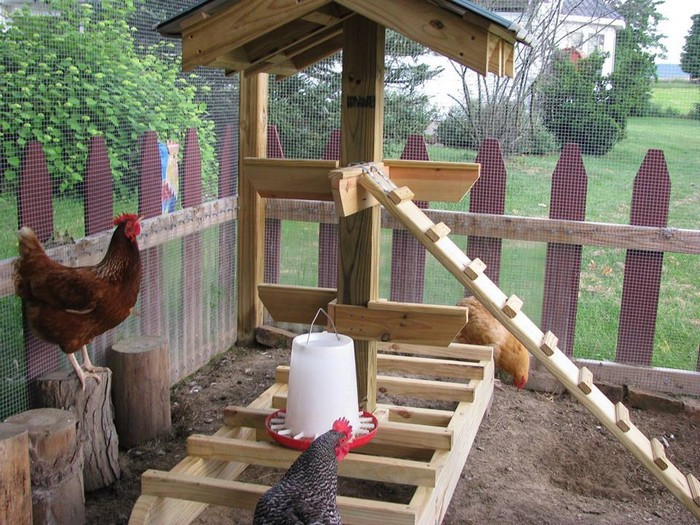 Best ideas about DIY Jungle Gym . Save or Pin Keep your backyard chickens healthy by building them a Now.