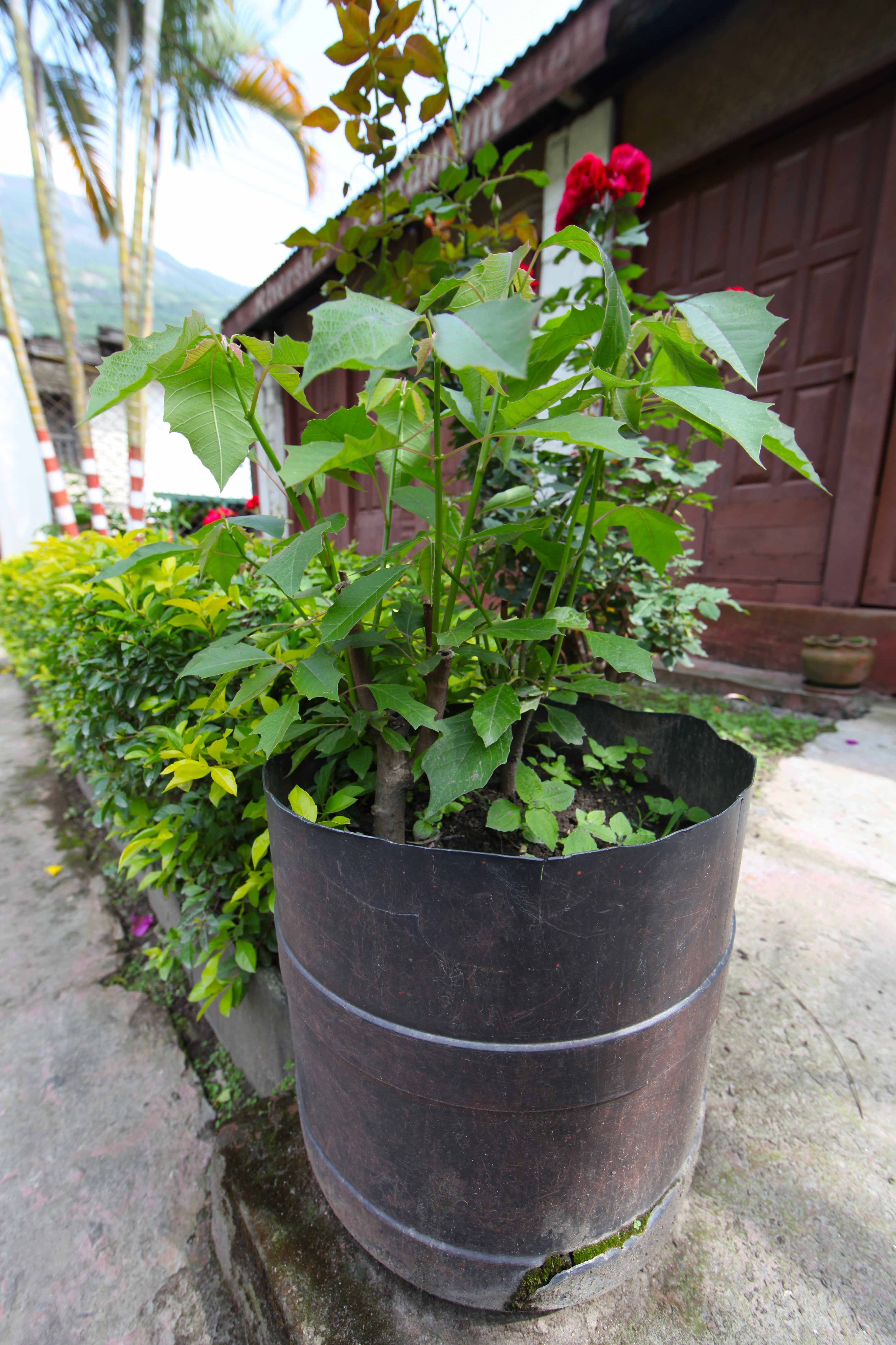 Best ideas about DIY Large Planters . Save or Pin 5 DIY Planters From the Himalaya Now.