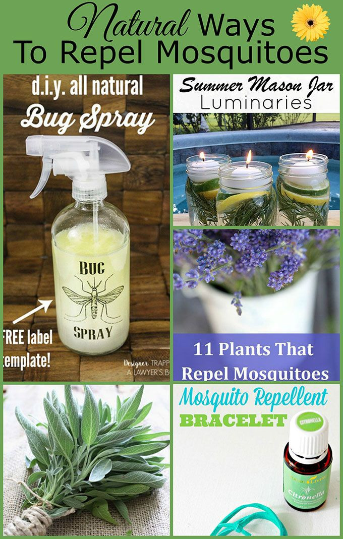 Best ideas about DIY Mosquito Yard Spray . Save or Pin Natural Ways To Repel Mosquitoes Without Bug Spray Now.